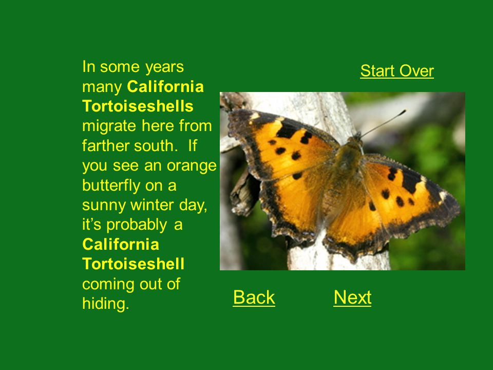 OK.Now it gets hard. Lets see if you can learn what caterpillar turns into each butterfly.