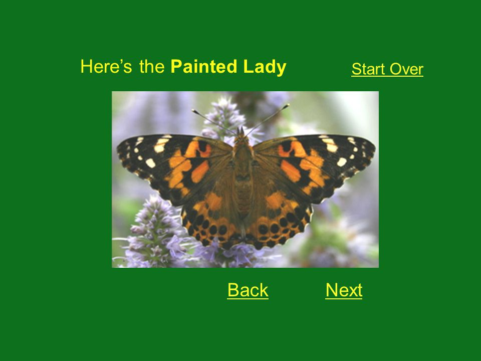 Heres the Painted Lady NextBack Start Over