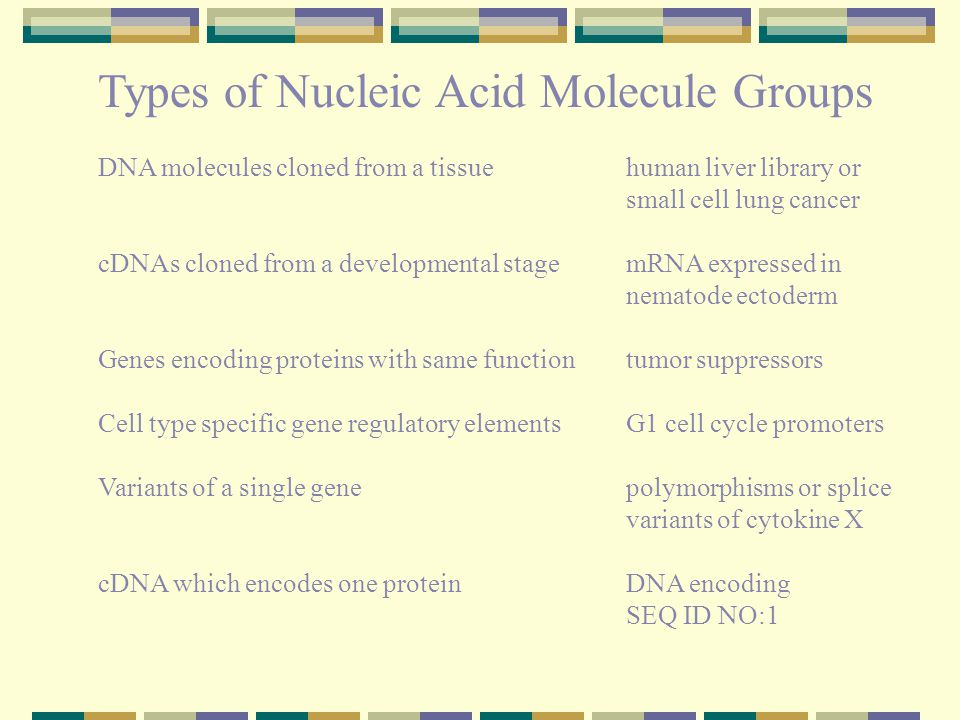Types of Nucleic Acid Molecule Groups DNA molecules cloned from a tissuehuman liver library or small cell lung cancer cDNAs cloned from a developmental stage mRNA expressed in nematode ectoderm Genes encoding proteins with same functiontumor suppressors Cell type specific gene regulatory elements G1 cell cycle promoters Variants of a single gene polymorphisms or splice variants of cytokine X cDNA which encodes one protein DNA encoding SEQ ID NO:1
