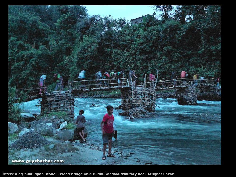 Morning rush hour of cattle on the Namrung entrance bridge