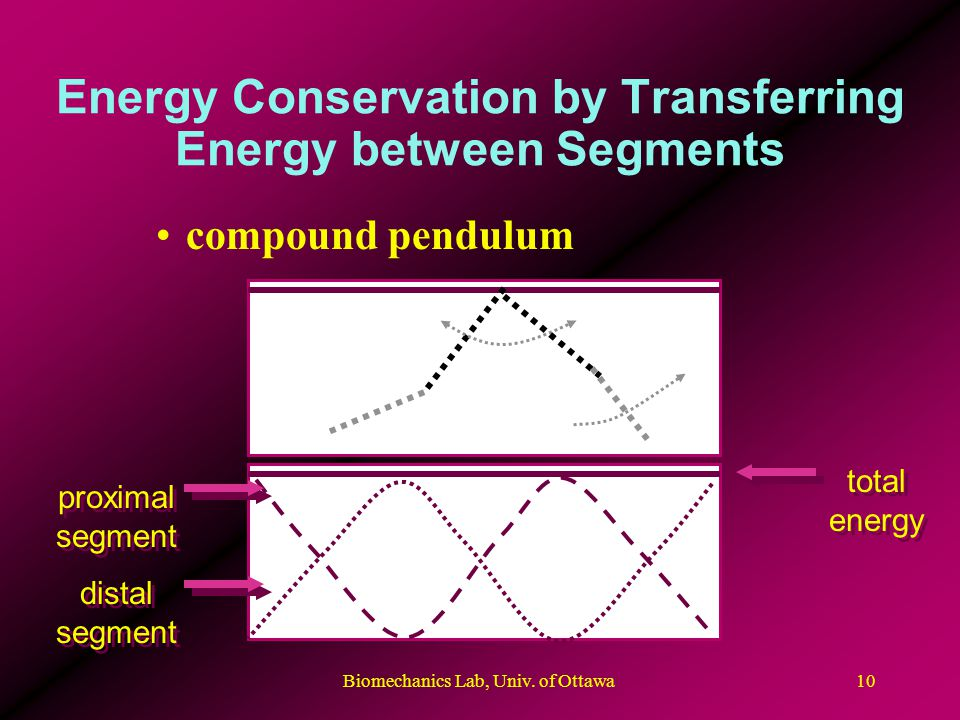Biomechanics Lab, Univ. of Ottawa10 Energy Conservation by Transferring Energy between Segments compound pendulum proximal segment total energy distal