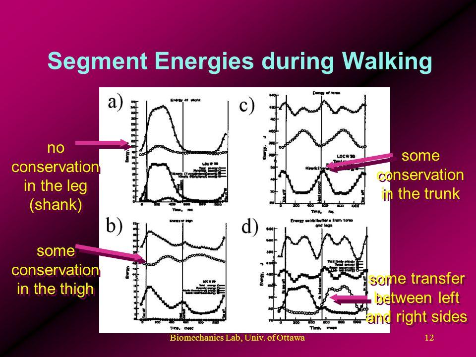 Biomechanics Lab, Univ. of Ottawa12 Segment Energies during Walking no conservation in the leg (shank) some conservation in the thigh some conservatio