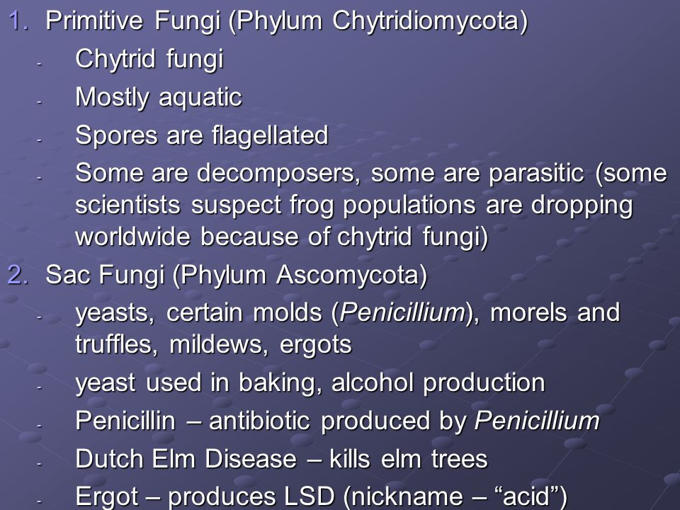3.Bread Molds (Phylum Zygomycota) - Rhizopus – common bread mold - Most species are decomposers - Symbiotic species – mycorrhizae form mutualistic partnerships with plant roots, help plants fix nitrogen 4.Club Fungi (Phylum Basidiomycota) - Club-shaped fruiting bodies - Include mushrooms, puffballs, bracket (shelf) fungi, rusts, smuts