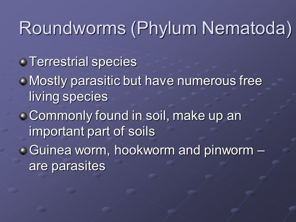 Roundworms (Phylum Nematoda) Terrestrial species Mostly parasitic but have numerous free living species Commonly found in soil, make up an important p