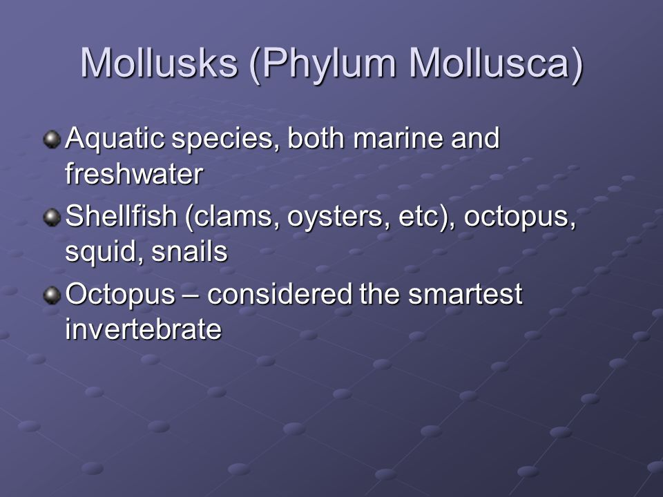 Mollusks (Phylum Mollusca) Aquatic species, both marine and freshwater Shellfish (clams, oysters, etc), octopus, squid, snails Octopus – considered th