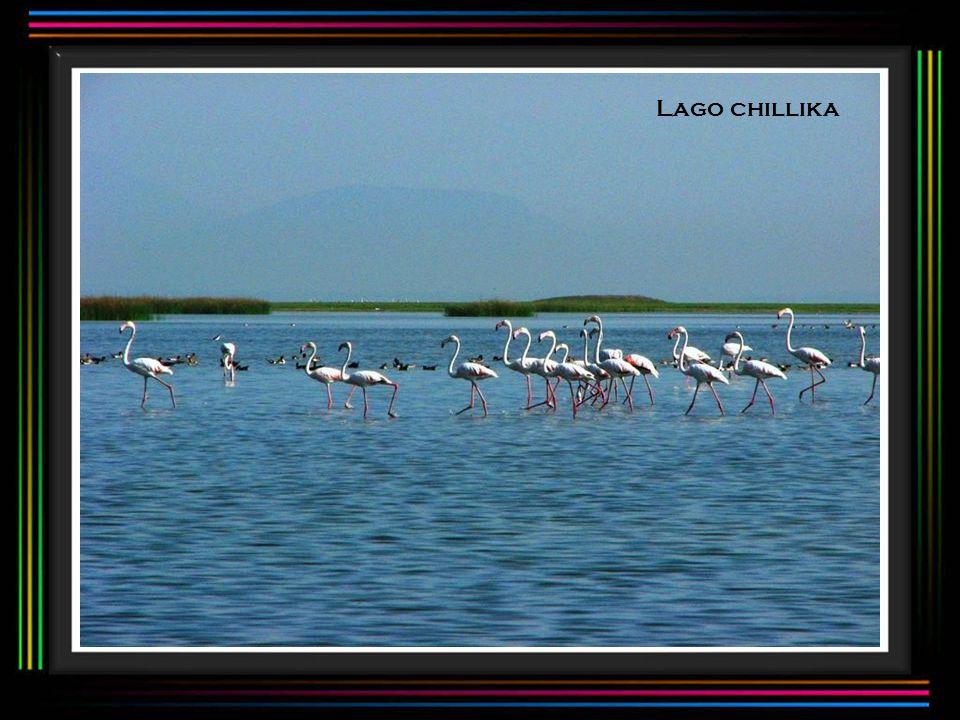 Lago chillika
