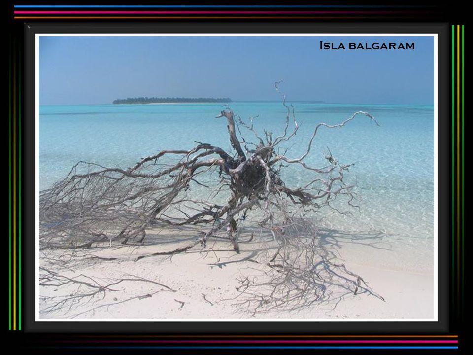 Isla balgaram