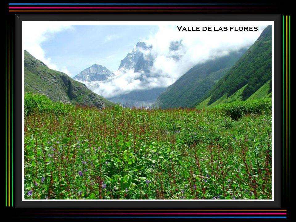 Valle de las flores