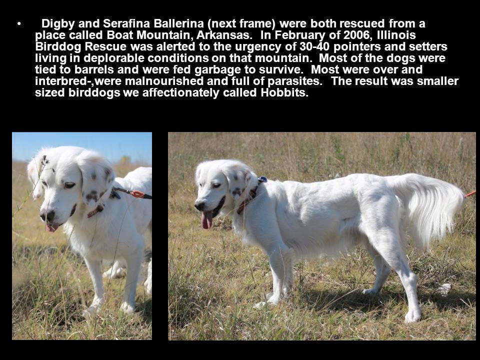 Digby and Serafina Ballerina (next frame) were both rescued from a place called Boat Mountain, Arkansas.