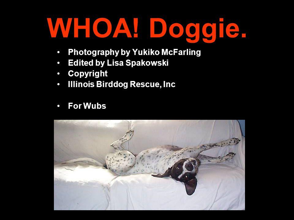 WHOA. Doggie.