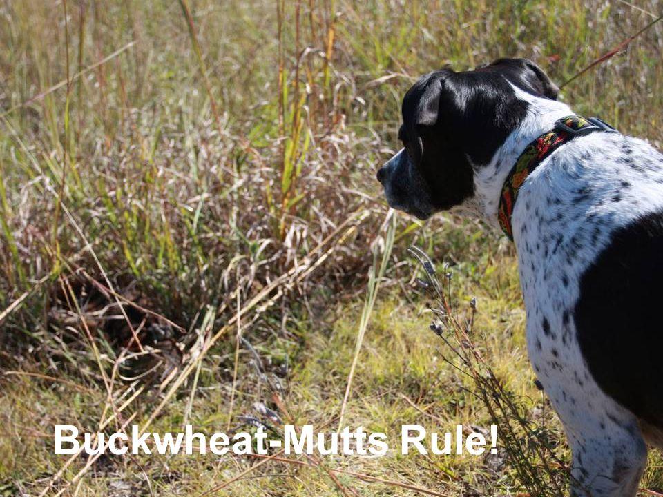 Buckwheat-Mutts Rule!
