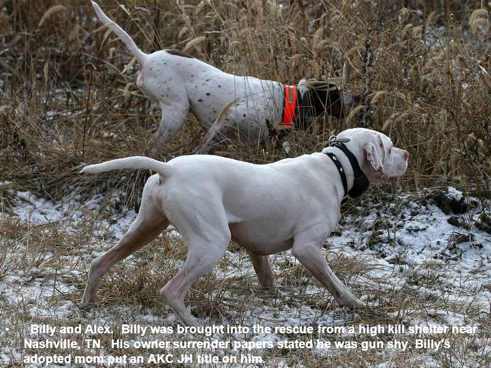 Billy and Alex. Billy was brought into the rescue from a high kill shelter near Nashville, TN.
