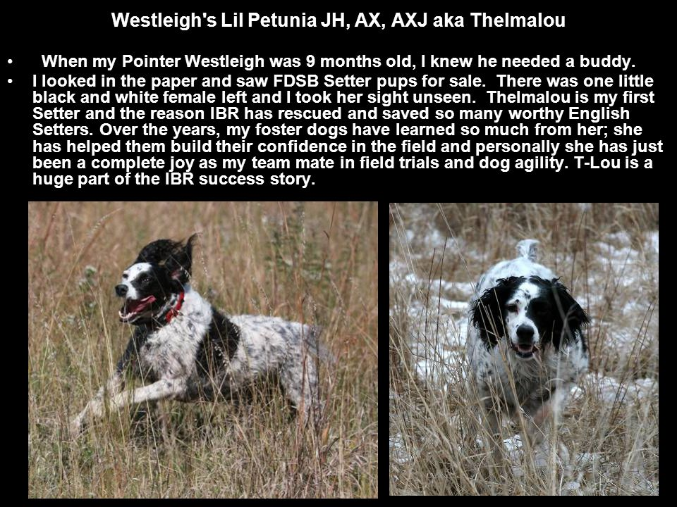 When my Pointer Westleigh was 9 months old, I knew he needed a buddy.