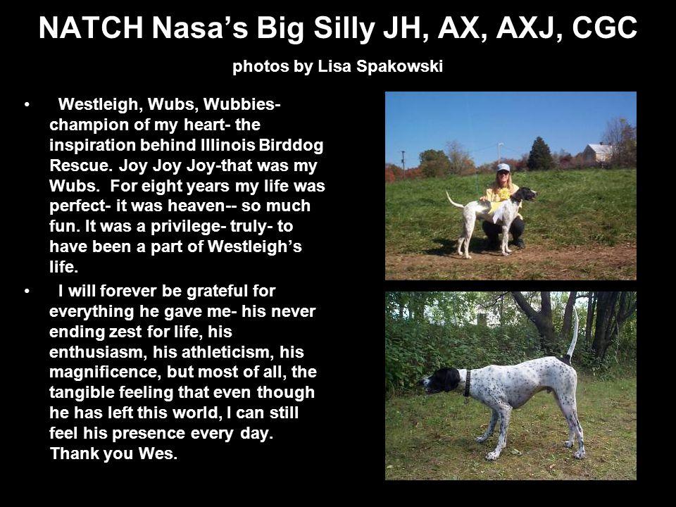 NATCH Nasas Big Silly JH, AX, AXJ, CGC photos by Lisa Spakowski Westleigh, Wubs, Wubbies- champion of my heart- the inspiration behind Illinois Birddog Rescue.