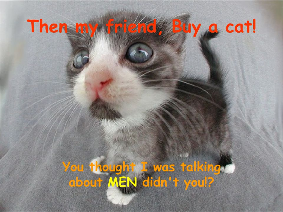 Then my friend, Buy a cat! You thought I was talking about MEN didn t you!