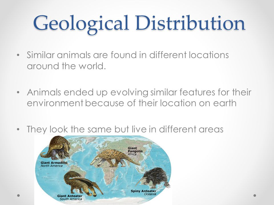Geological Distribution Similar animals are found in different locations around the world. Animals ended up evolving similar features for their enviro