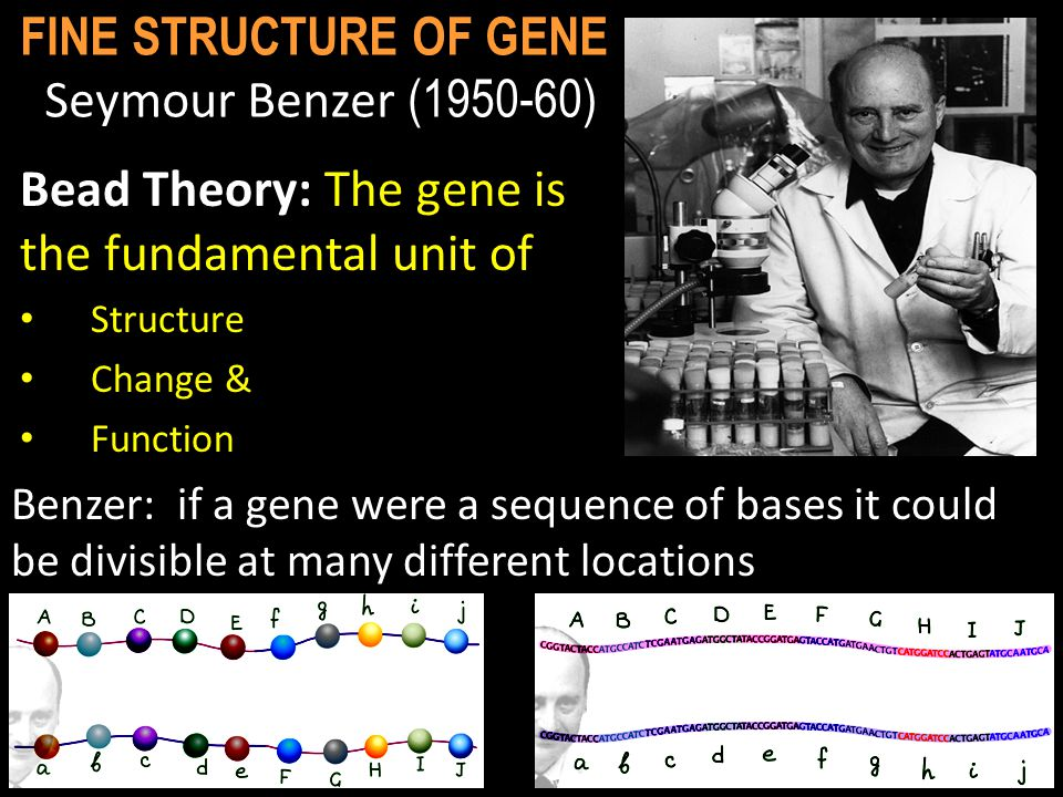hypothesis #3: gene is fundamental unit of function...