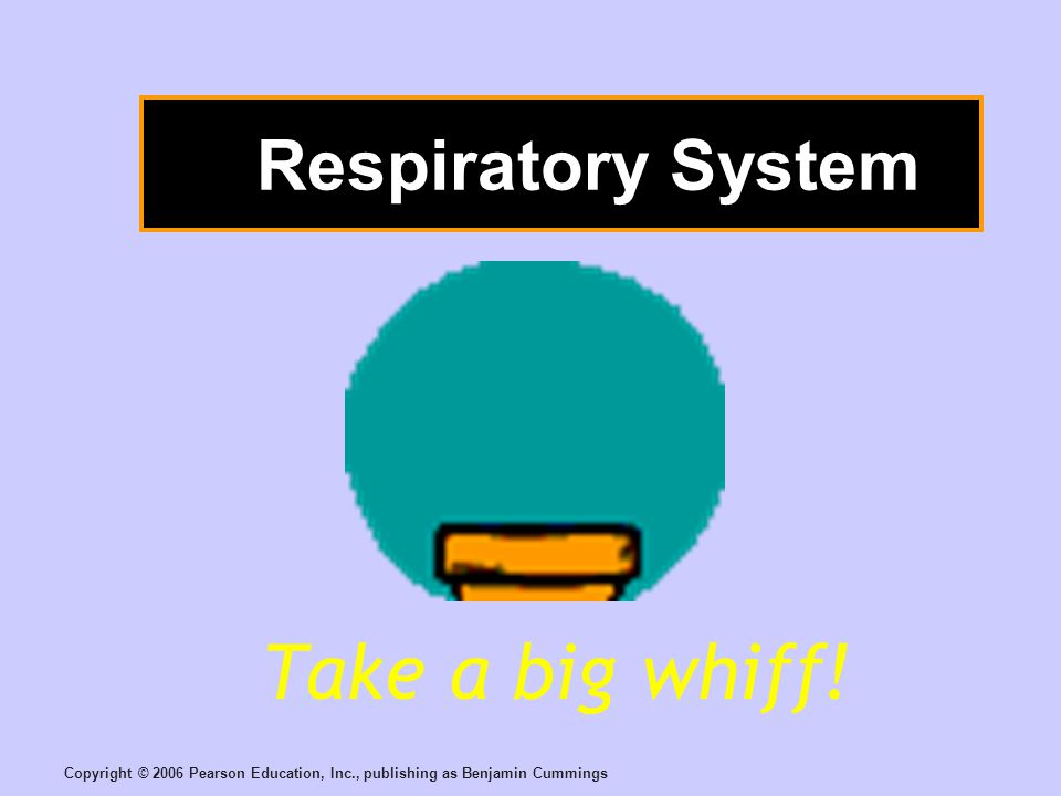 Copyright © 2006 Pearson Education, Inc., publishing as Benjamin Cummings Respiratory System Take a big whiff!