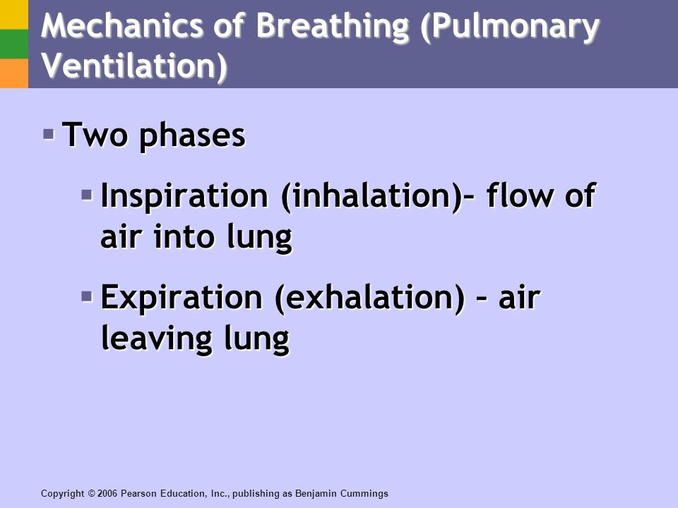Copyright © 2006 Pearson Education, Inc., publishing as Benjamin Cummings Mechanics of Breathing (Pulmonary Ventilation) Two phases Two phases Inspiration (inhalation)– flow of air into lung Inspiration (inhalation)– flow of air into lung Expiration (exhalation) – air leaving lung Expiration (exhalation) – air leaving lung