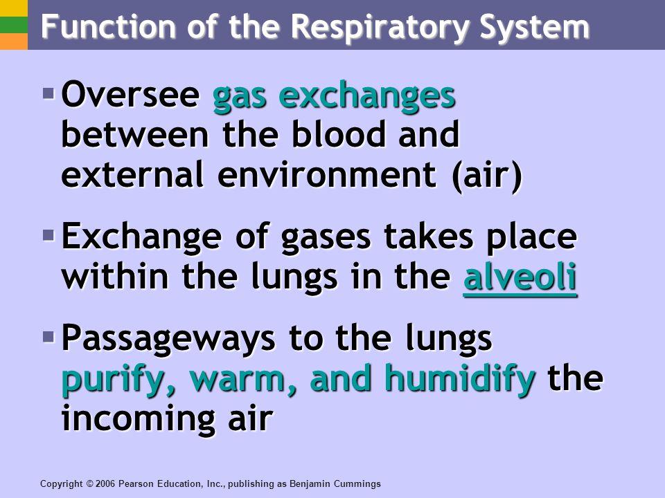 Copyright © 2006 Pearson Education, Inc., publishing as Benjamin Cummings Respiratory Membrane (Air-Blood Barrier) Figure 13.6