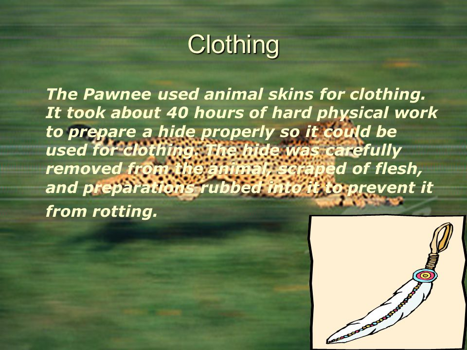 Clothing The Pawnee used animal skins for clothing. It took about 40 hours of hard physical work to prepare a hide properly so it could be used for cl