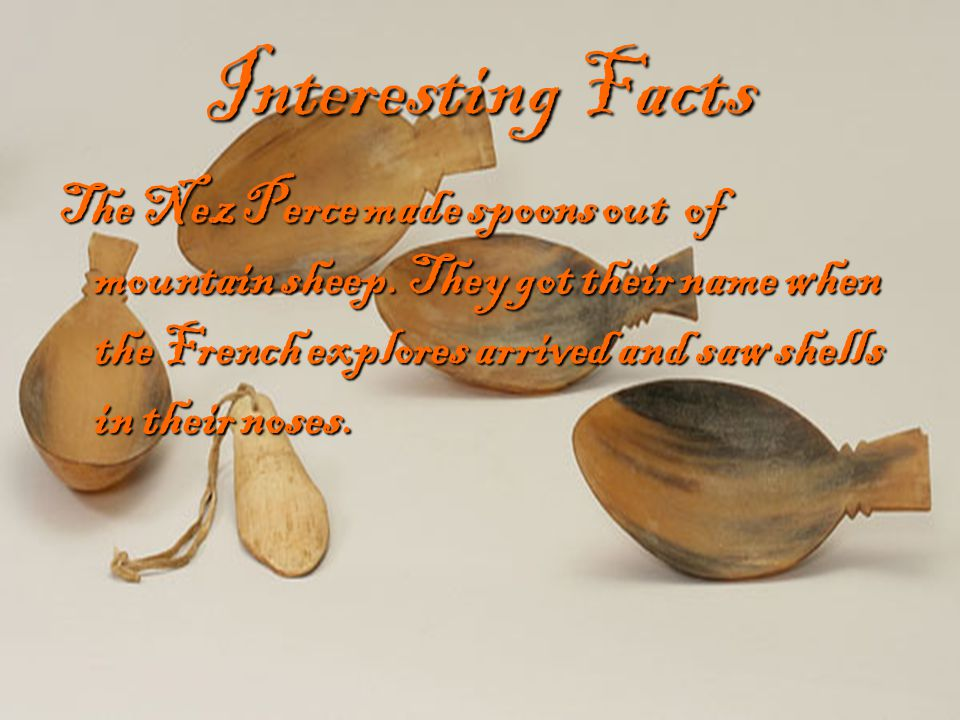 Interesting Facts The Nez Perce made spoons out of mountain sheep. They got their name when the French explores arrived and saw shells in their noses.