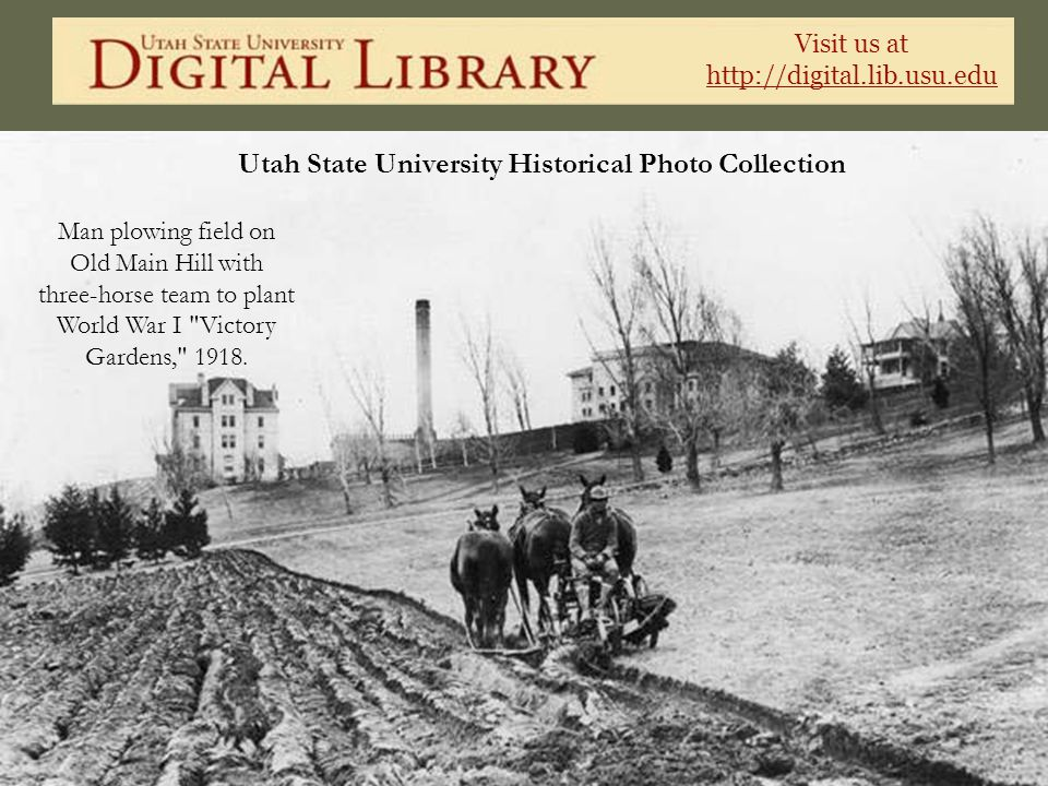 Visit us at http://digital.lib.usu.edu Utah State University Historical Photo Collection Man plowing field on Old Main Hill with three-horse team to p