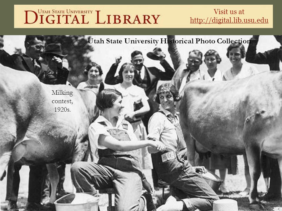 Visit us at http://digital.lib.usu.edu Utah State University Historical Photo Collection Milking contest, 1920s.