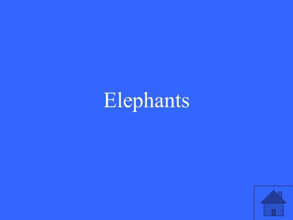 33 Elephants