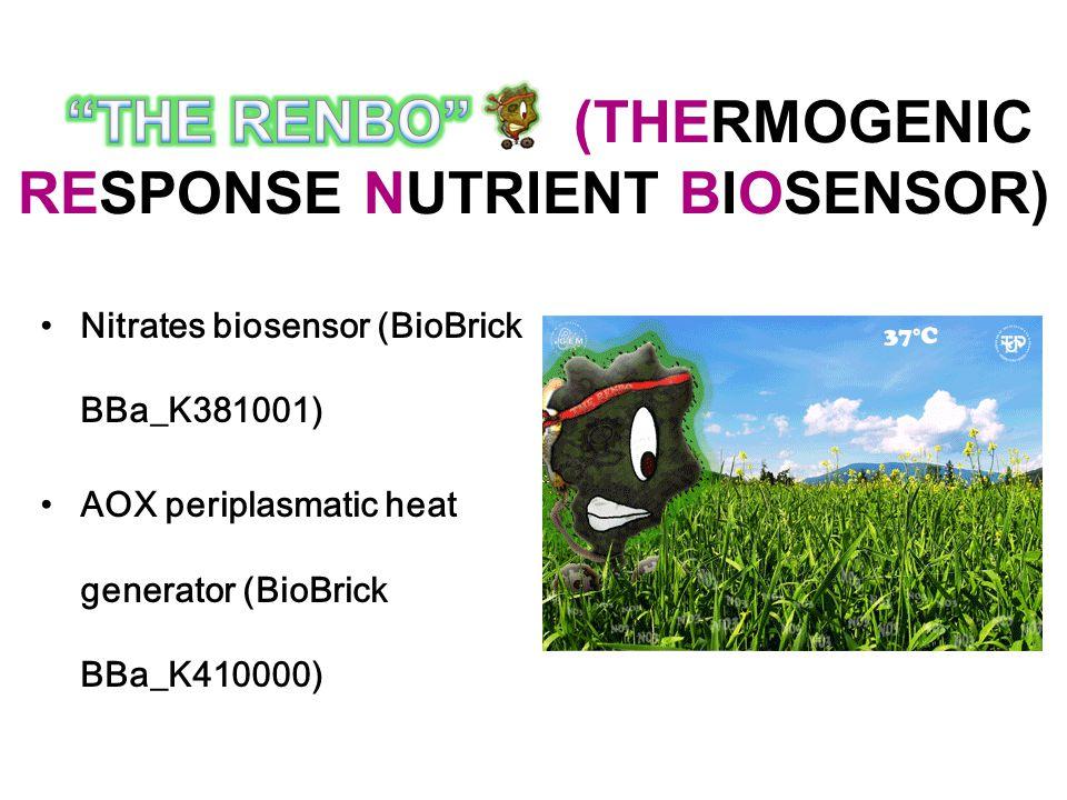 Nitrates biosensor (BioBrick BBa_K381001) AOX periplasmatic heat generator (BioBrick BBa_K410000)