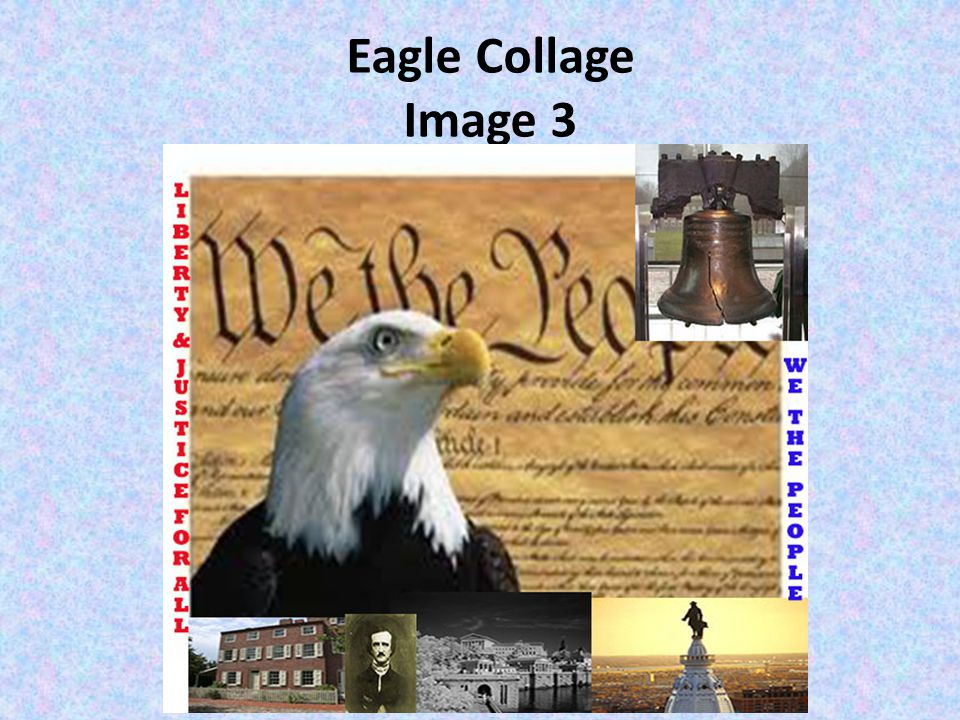 Eagle Collage Image 3