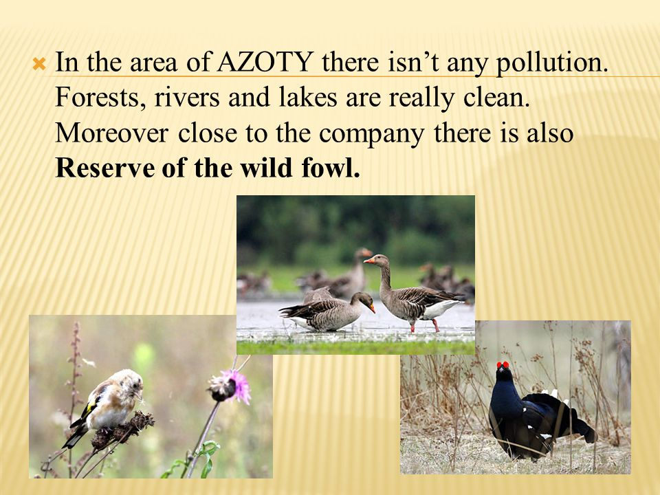 In the area of AZOTY there isnt any pollution. Forests, rivers and lakes are really clean. Moreover close to the company there is also Reserve of the