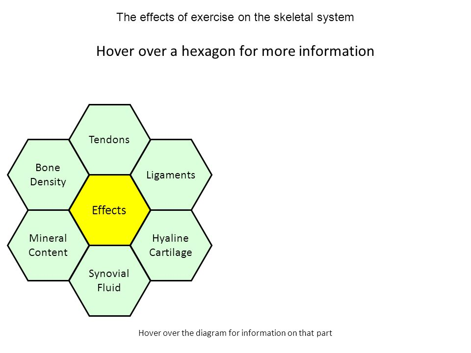 Hover over the diagram for information on that part Hover over a hexagon for more information Effects Tendons Ligaments Hyaline Cartilage Mineral Content Bone Density Synovial Fluid The effects of exercise on the skeletal system