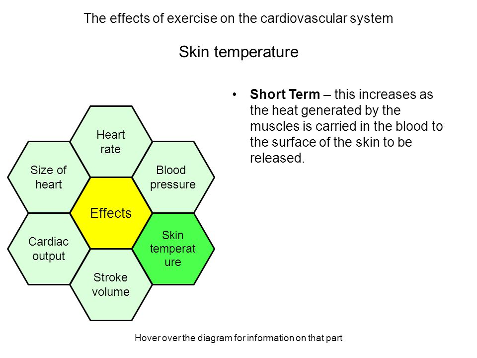 Hover over the diagram for information on that part Stroke volume Short Term – This increases as more blood is pumped out of the left ventricle of the heart in one contraction to satisfy the increased demand of oxygen.