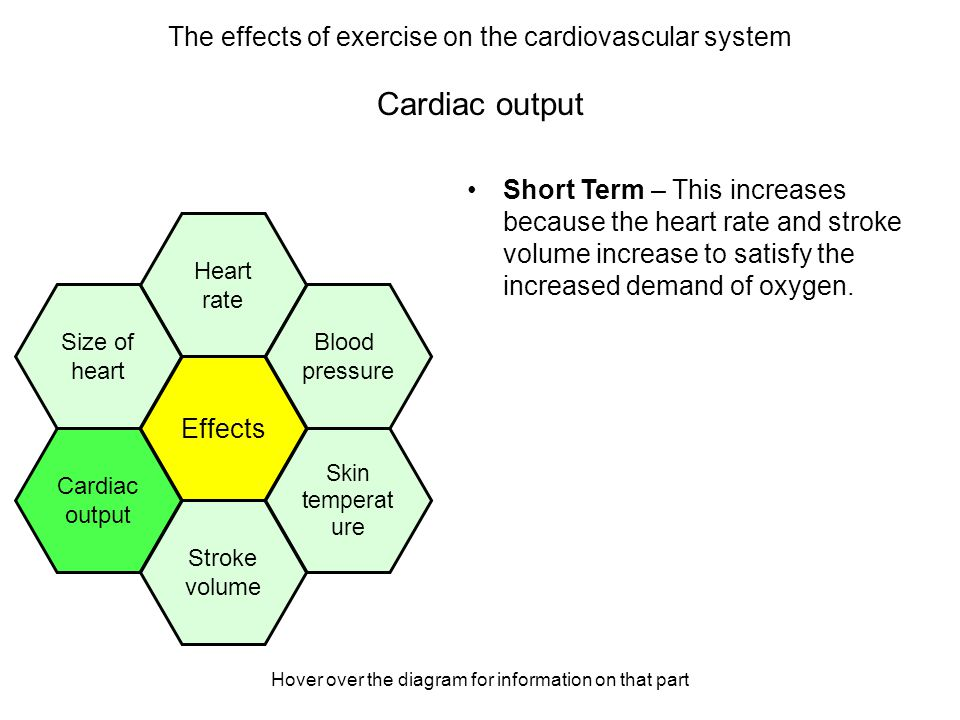 Hover over the diagram for information on that part Cardiac output Short Term – This increases because the heart rate and stroke volume increase to sa