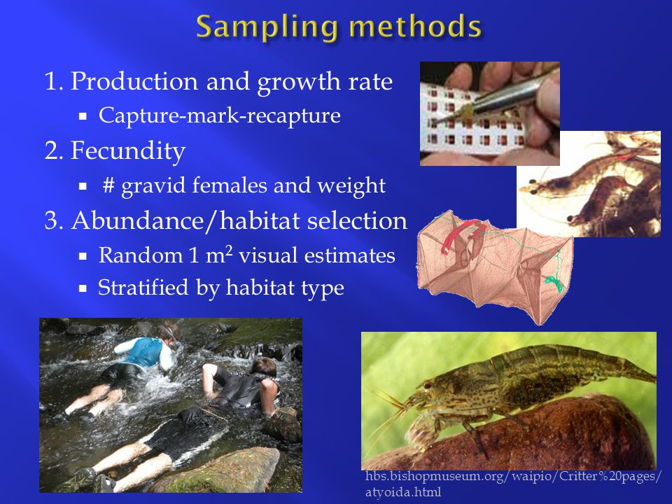 Growth rate Secondary production Gravid females Individual fecundity In streams with less precipitation (i.e.