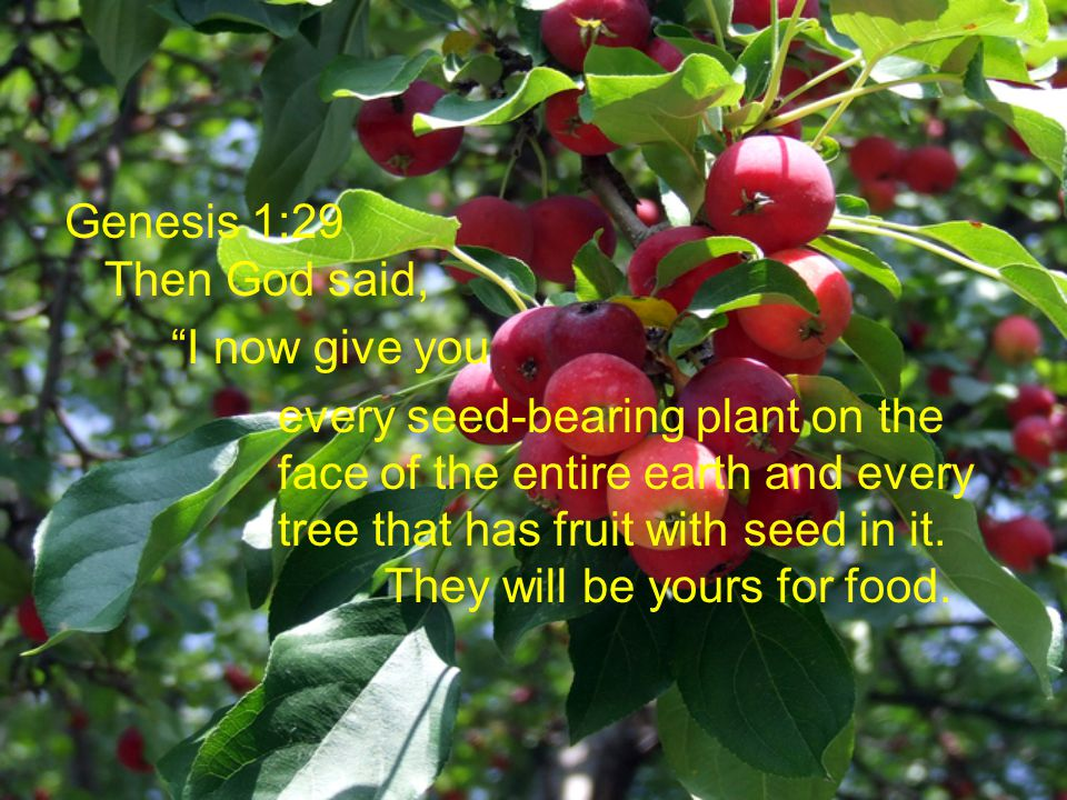 Genesis 1:29 Then God said, I now give you every seed-bearing plant on the face of the entire earth and every tree that has fruit with seed in it.