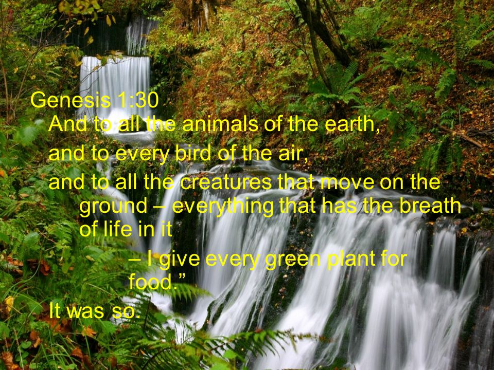 Genesis 1:30 And to all the animals of the earth, and to every bird of the air, and to all the creatures that move on the ground – everything that has the breath of life in it – I give every green plant for food.