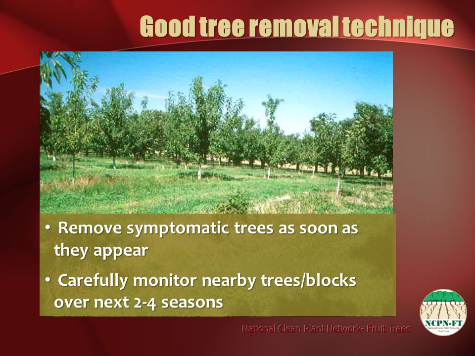 Remove symptomatic trees as soon as they appear Remove symptomatic trees as soon as they appear Carefully monitor nearby trees/blocks over next 2-4 se