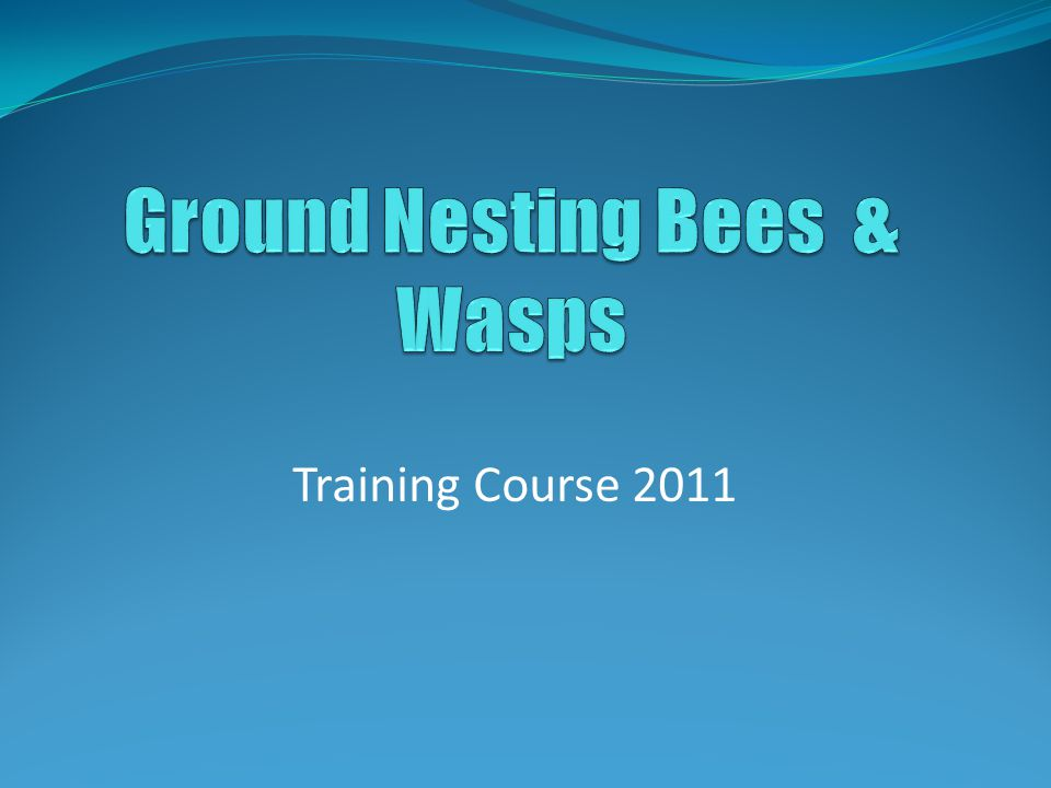 Training Course 2011