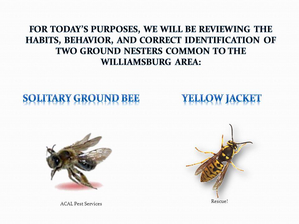 ACAL Pest Services Rescue!