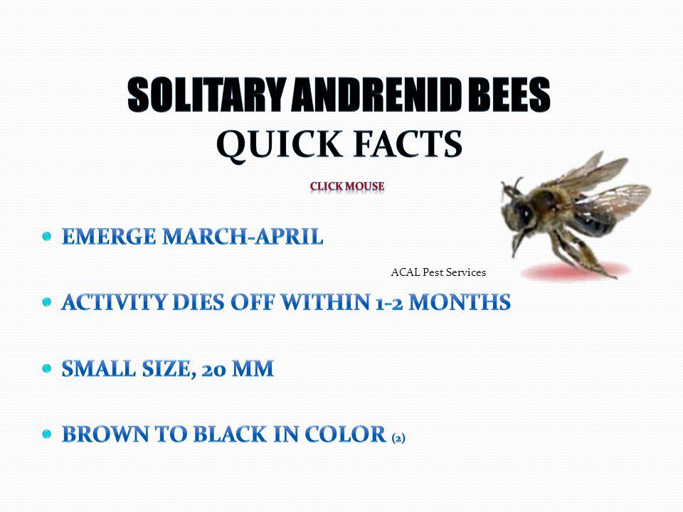 ACAL Pest Services
