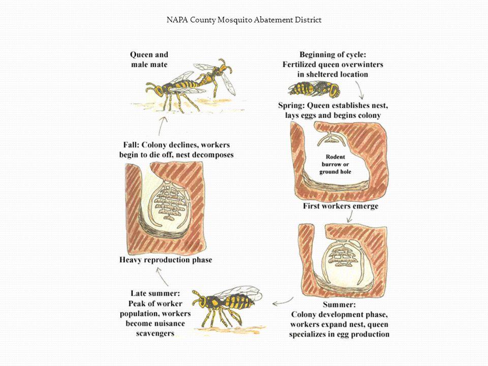 NAPA County Mosquito Abatement District