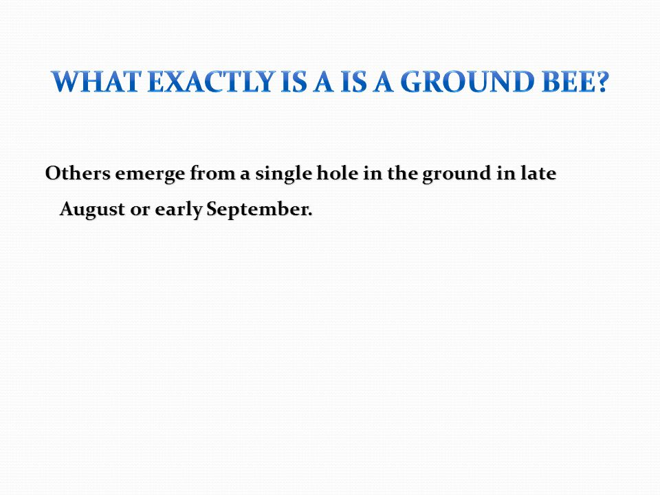 Others emerge from a single hole in the ground in late August or early September.
