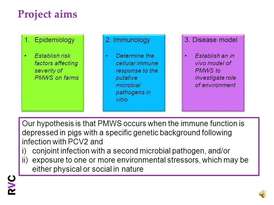 Background Epidemiology of PMWS has changed over the years (epidemic vs endemic) Change in affected age groups reported It is still unclear what triggers the onset of typical clinical signs Porcine circovirus 2 (PCV2): necessary agent Multi-factorial disease (environment, genetics, co-infections)