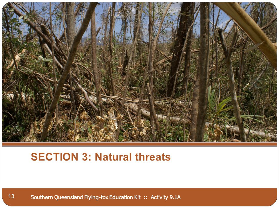 Southern Queensland Flying-fox Education Kit :: Activity 9.1A SECTION 3: Natural threats 13