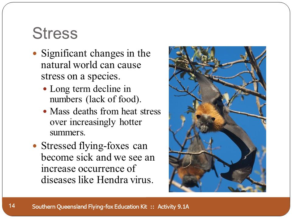 Southern Queensland Flying-fox Education Kit :: Activity 9.1A Stress 14 Significant changes in the natural world can cause stress on a species. Long t