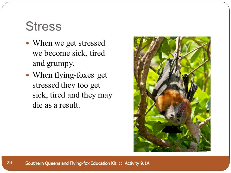 Southern Queensland Flying-fox Education Kit :: Activity 9.1A Stress 23 When we get stressed we become sick, tired and grumpy. When flying-foxes get s