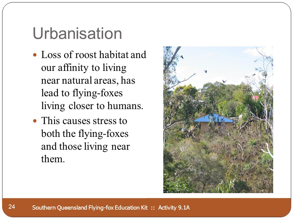 Southern Queensland Flying-fox Education Kit :: Activity 9.1A Urbanisation 24 Loss of roost habitat and our affinity to living near natural areas, has