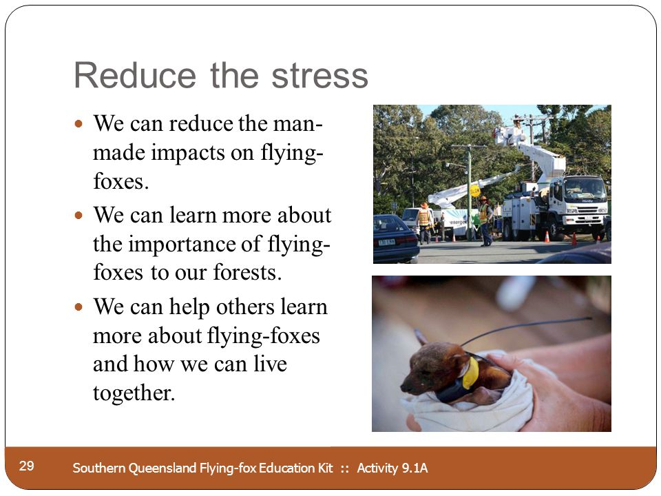 Southern Queensland Flying-fox Education Kit :: Activity 9.1A Reduce the stress 29 We can reduce the man- made impacts on flying- foxes. We can learn